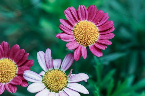 flowers-2471319_640